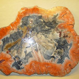 AZ petrified wood slab, unpolished