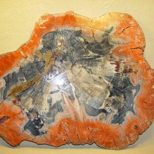 AZ petrified wood slab, unpolished