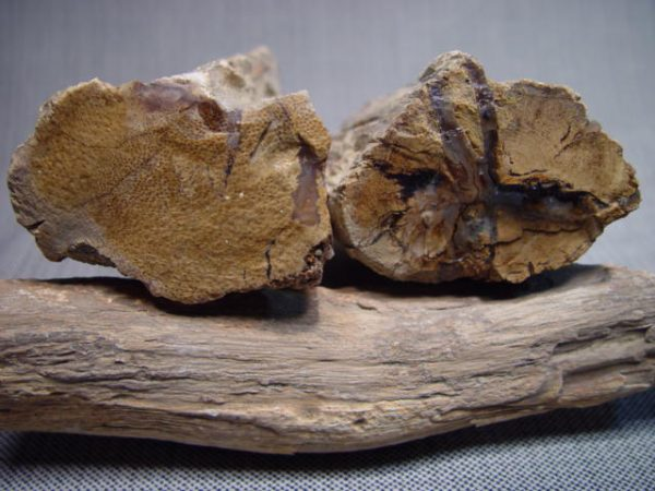 Rough, Eden Valley, petrified wood, small
