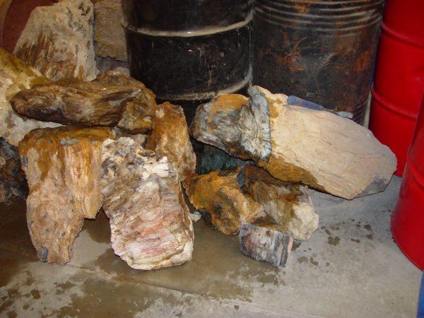 Rough, Hubbard Basin petrified wood