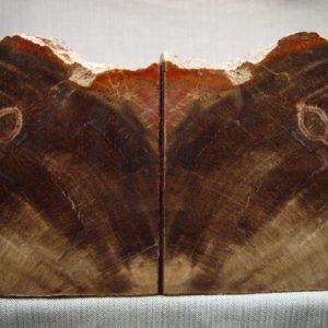 Circle Cliffs petrified wood bookends (16)